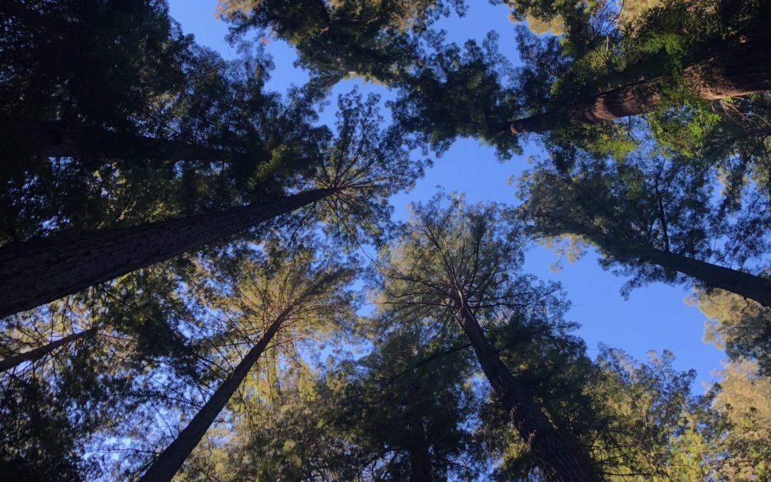 The Experience of Forest Bathing